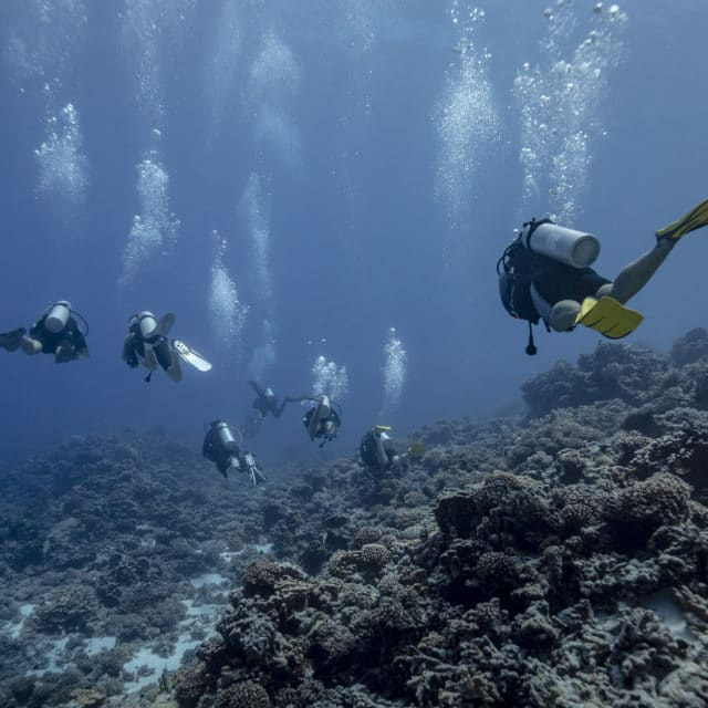 Plongée avec les requins